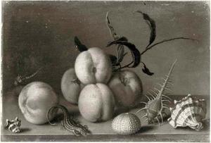 Perziken, een zeeappel, schelpen, een hagedis en een libel op een stenen tafel
