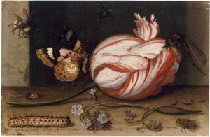 Een tulp met een vlinder, kleine insecten en vergeet-mij-nietjes