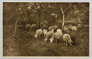 Schaapsherder met zijn kudde