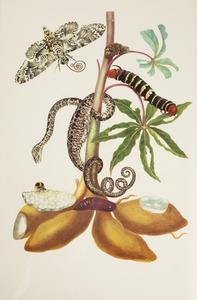 Cassave met tuinboa, tetriopijlstaart, boomnimf, rups en metamorfose van landelijke pijlstaart