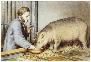 Dr. G.F. Westerman voert nijlpaard