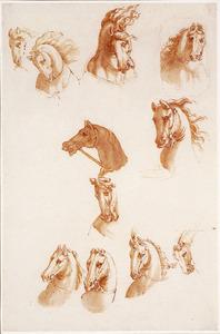 Studies van paardenhoofden