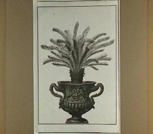 Palmboompje in een pot