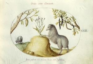 Schaap, leunend op een heuveltje met daarop een plant, links en rechts vruchtbomen