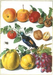 Vruchten, noten, een vogel (Tangara fastuosa) en een spin