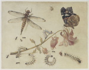 Rupsen en andere insecten rond een akeleitak