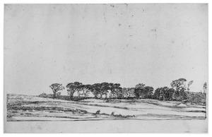 Landschap met een rij bomen