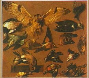 Studie van vogels