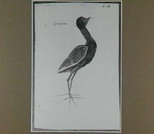 Aguapeacoca (Braziliaanse vogel)