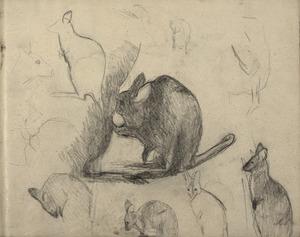 Schetsboekblad met schetsen van kangoeroe's waaronder een drinkend jong