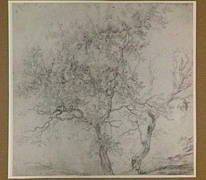 Twee bomen