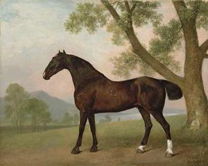 Donkerbruin paard naast een boom in een uitgestrekt landschap