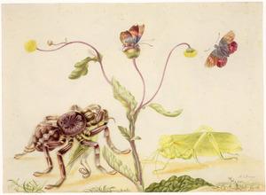 Vogelspin, sprinkhaan, vlinders en plant