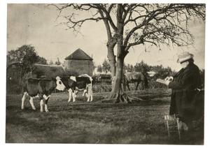 Willem Maris buiten koeien aan het tekenen