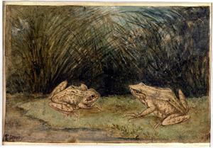 Twee kikkers in het gras