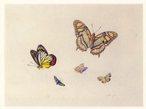 Vijf vlinders
