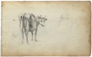 Koe en koeienkop