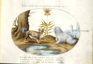 Twee honden aan de rand van een vijver, daartussen een keizerskroon. Links een boomstam, rechts in de achtergrond een kasteel