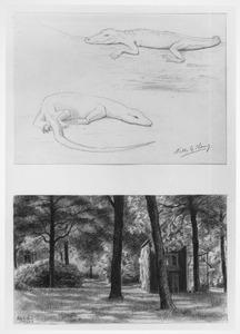 Blad met twee studies van een doorkijk met het duivenhuis en een krokodil en een leguaan