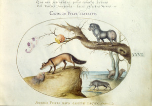 Appel, vos met dode haan, mandril, hyena en veelvraat