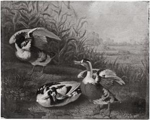 Drie eenden in een landschap