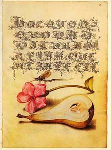 Dagkoekoeksbloem, peer en eendagsvlieg