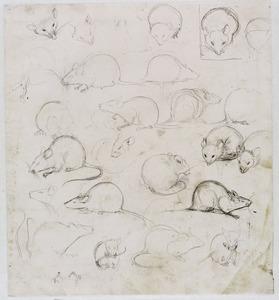 Studies van een muis