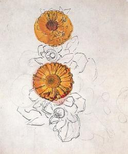 Study of two marigolds 2