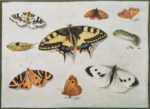 Zeven vlinders, een pop en een rups