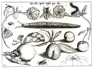 Naaktslak, insecten, bloemen, kersen en een citroen