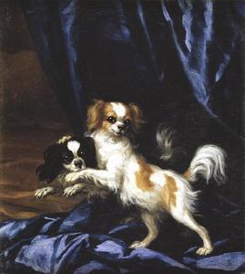 Portret van twee kleine honden