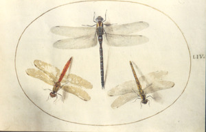 Drie libellen