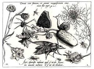 Augurk, slak, bloemen, mot, spin en ander insecten