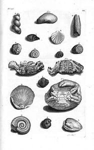 Fossiele schelpen en krabben