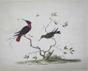 Studie van twee vogels en drie insecten