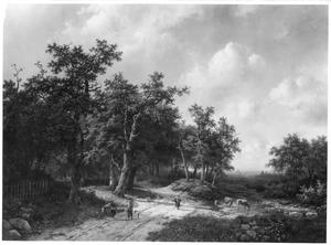 Boslandschap met zandweg