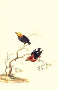 Twee vogels op een boomtak