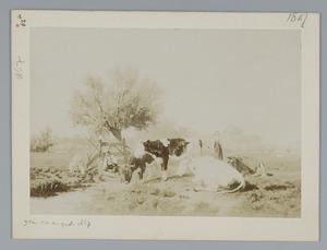 Weide met vee, visser en melkster