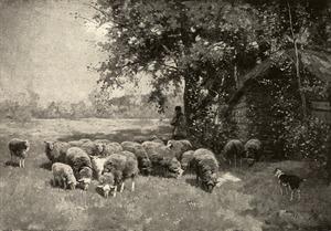 Herder met zijn kudde schapen