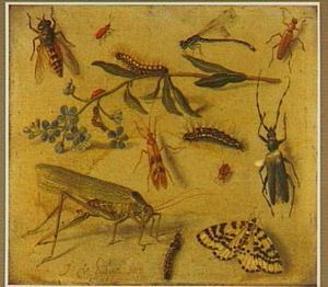 Studie van een sprinkhaan, andere insekten en een vergeet-me-nietje