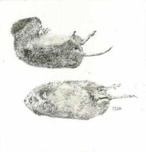 Twee dode veldmuizen
