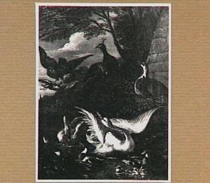 Roofvogel bedreigt zwanen met jongen in een vijver; op de oever twee pauwen