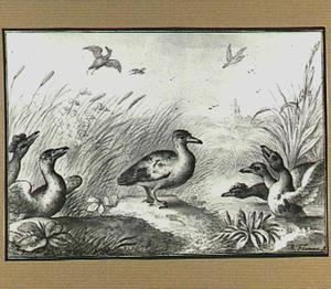 Watervogels in en bij een beek