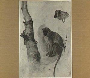 Studies van een aap en een boom