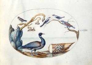 Gans, vinkachtige, drie zangvogels en boormossel