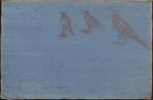 Vogelstudies
