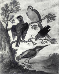 Papegaai en twee andere vogels in een boom, daaronder een lopende ijsvogel