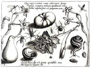 Anjer, pompoen, peer, slak, insecten en bloemen