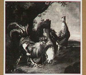 Twee kippen en een haan onder een boom