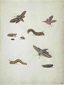 Studie van vlinders, rupsen, poppen en andere insecten